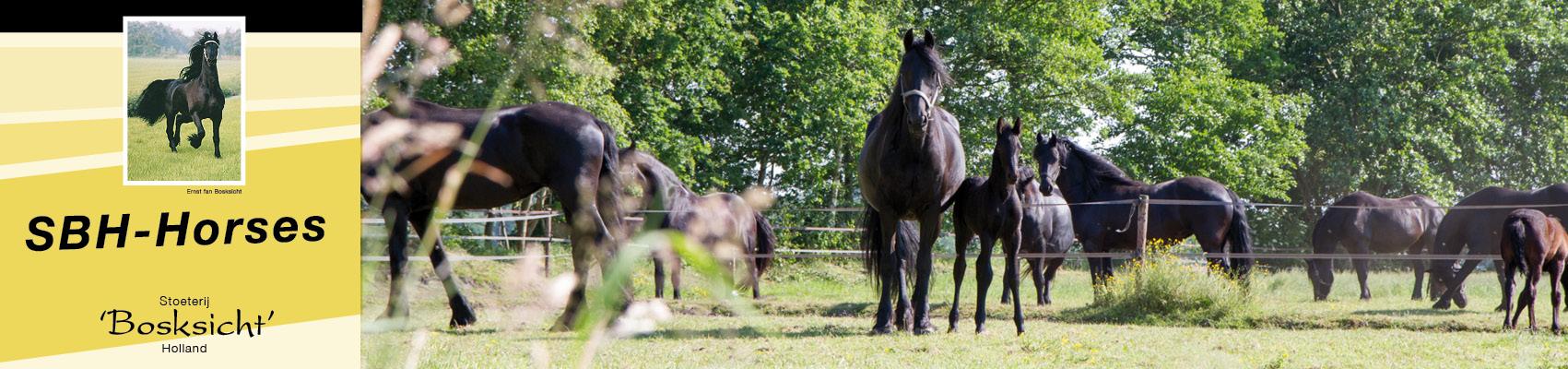 sbhhorses-frisianhorses-slidera4