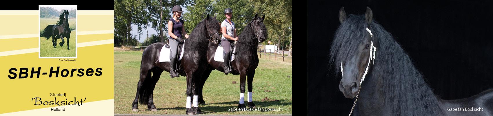 sbhhorses-frisianhorses-slidera7