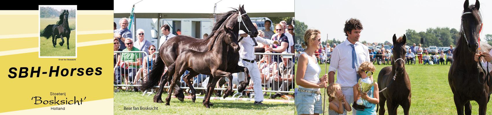 sbhhorses-frisianhorses-slidera8